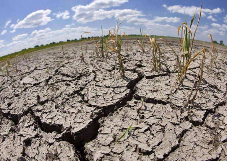 Las Semillas y los Cambios Climáticos