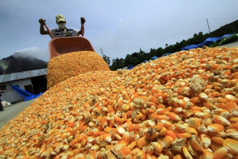 Retos agroalimentarios del proceso bolivariano