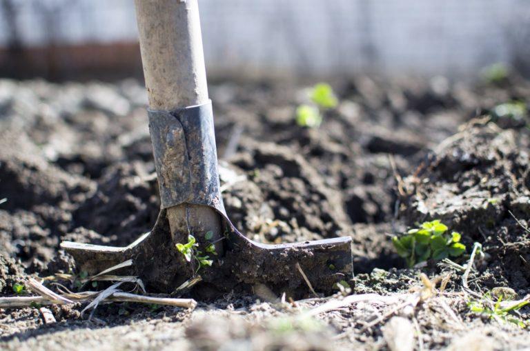 [OPINIÓN] La agroecología como resistencia: caso Venezuela